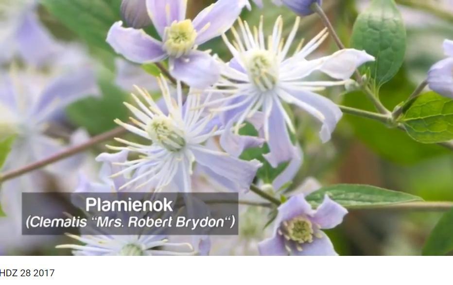 Herbár kvetín, kríkov a stromov - Obrázok č. 72