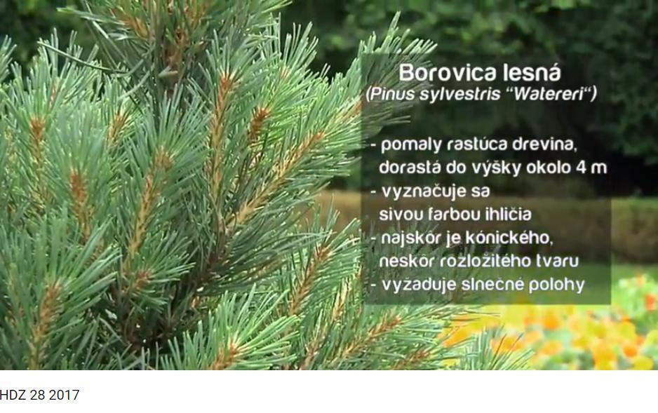 Herbár kvetín, kríkov a stromov - Obrázok č. 74