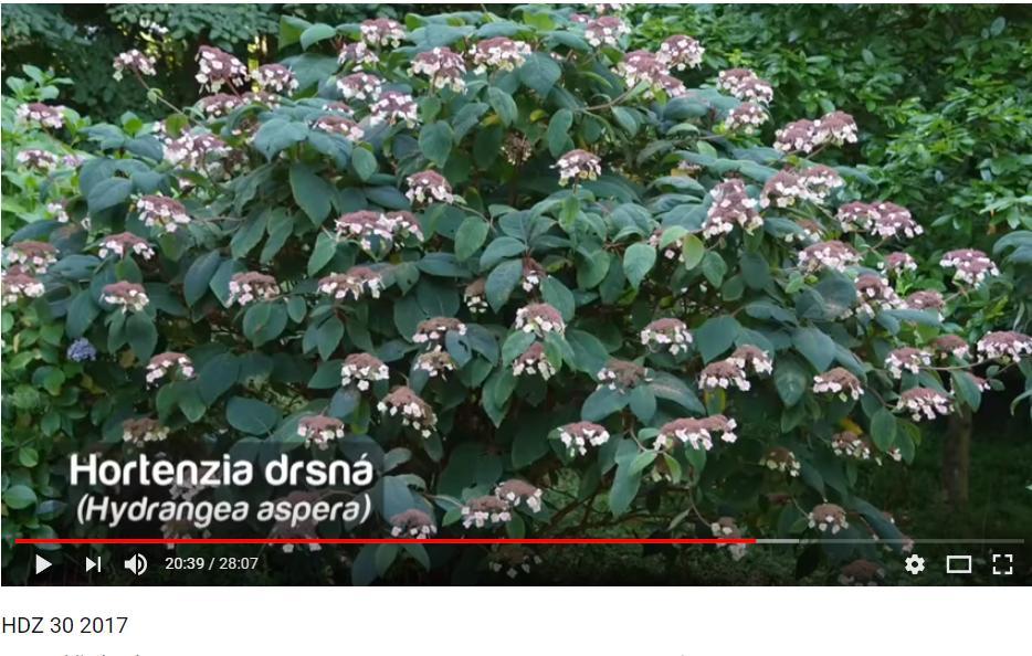 Herbár kvetín, kríkov a stromov - Obrázok č. 76