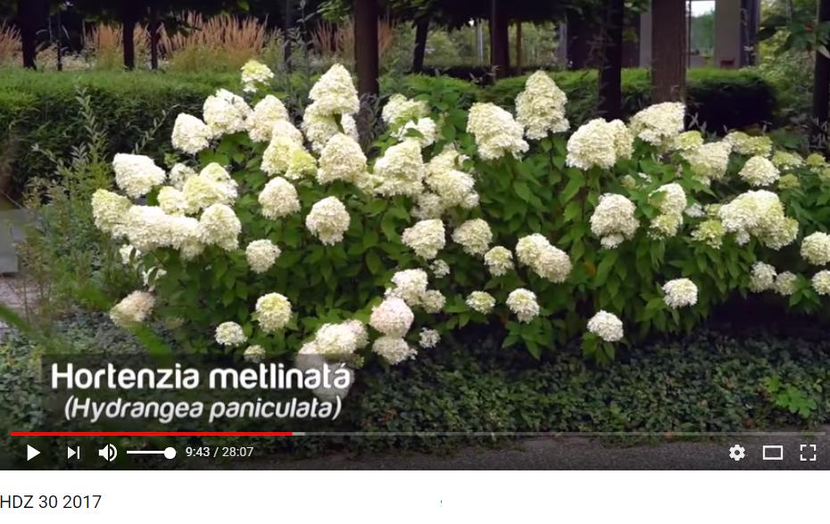 Herbár kvetín, kríkov a stromov - Obrázok č. 78