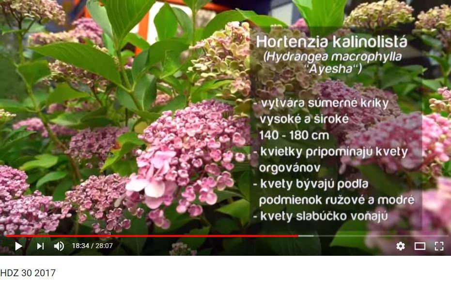 Herbár kvetín, kríkov a stromov - Obrázok č. 81