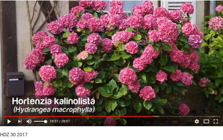 Herbár kvetín, kríkov a stromov - Obrázok č. 83
