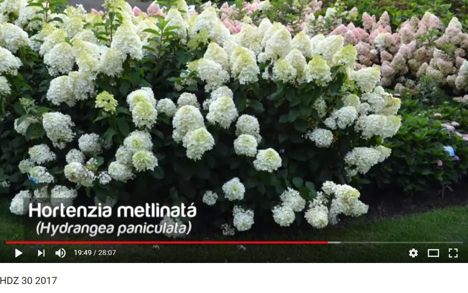 Herbár kvetín, kríkov a stromov - Obrázok č. 84