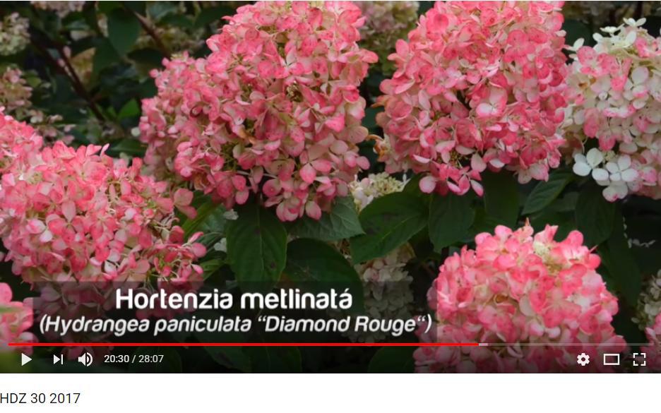 Herbár kvetín, kríkov a stromov - Obrázok č. 85