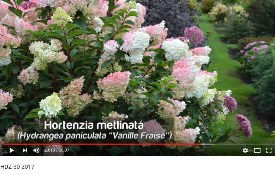 Herbár kvetín, kríkov a stromov - Obrázok č. 88