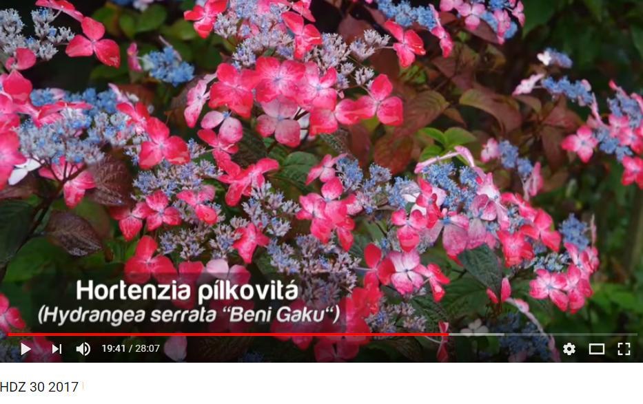 Herbár kvetín, kríkov a stromov - Obrázok č. 90