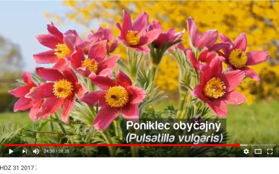 Herbár kvetín, kríkov a stromov - Obrázok č. 98