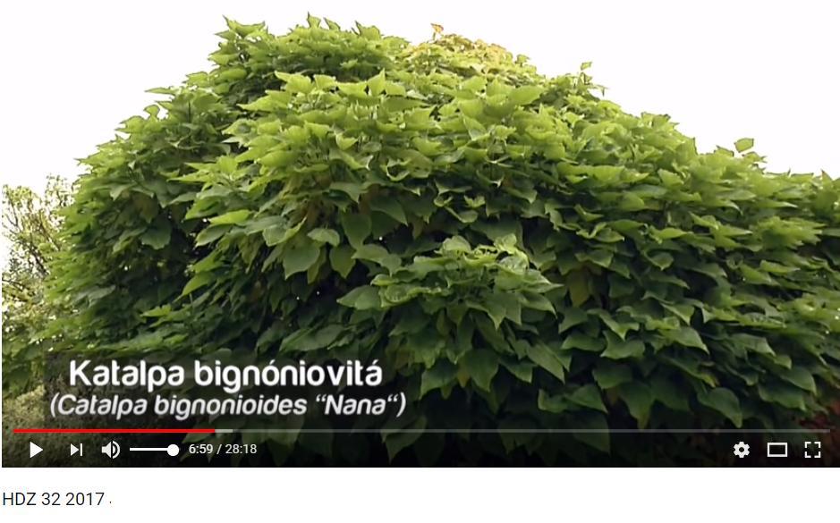Herbár kvetín, kríkov a stromov - Obrázok č. 101