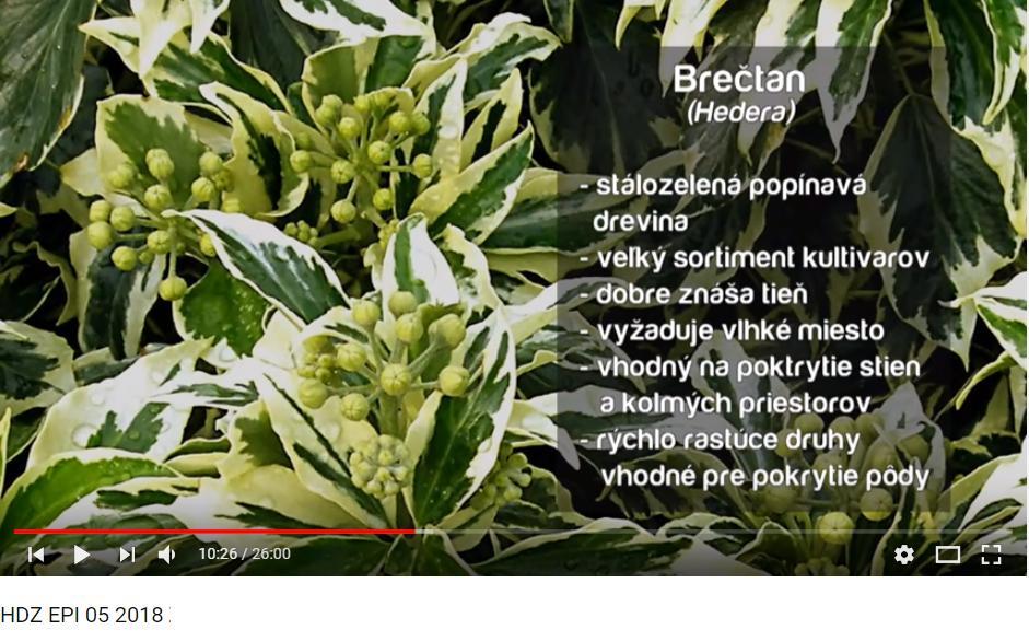 Herbár kvetín, kríkov a stromov - Obrázok č. 116