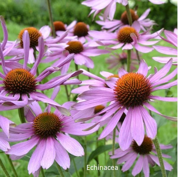 Herbár kvetín, kríkov a stromov - Obrázok č. 7