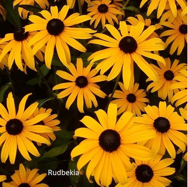 Herbár kvetín, kríkov a stromov - Obrázok č. 8