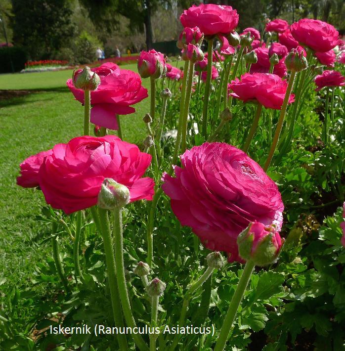 Herbár kvetín, kríkov a stromov - Obrázok č. 9