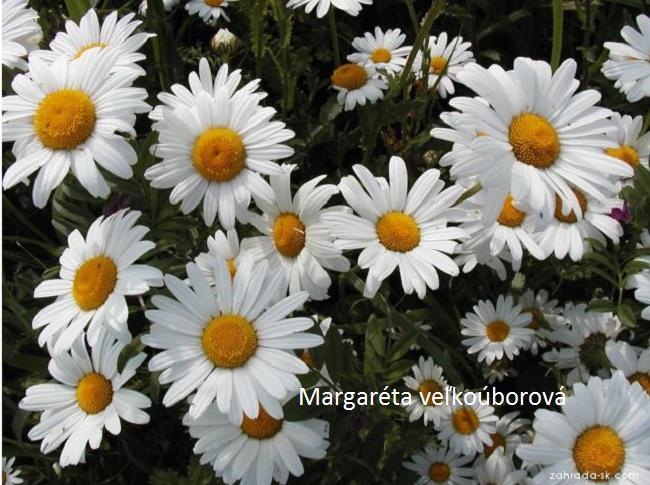 Herbár kvetín, kríkov a stromov - Obrázok č. 6