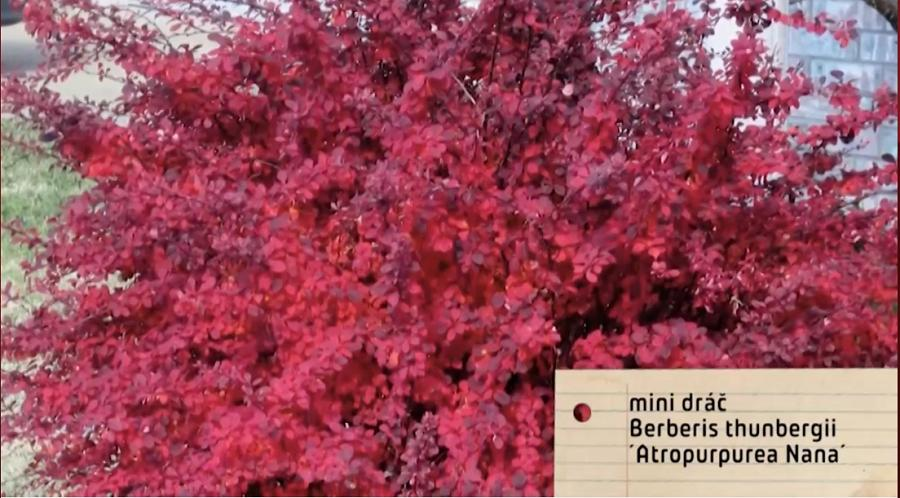 Herbár kvetín, kríkov a stromov - Obrázok č. 122