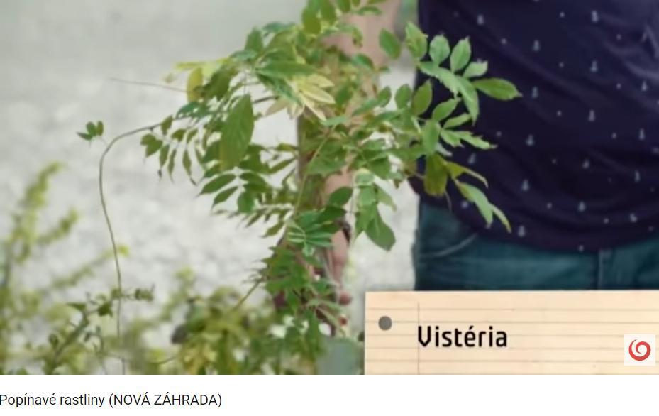 Herbár kvetín, kríkov a stromov - Obrázok č. 136