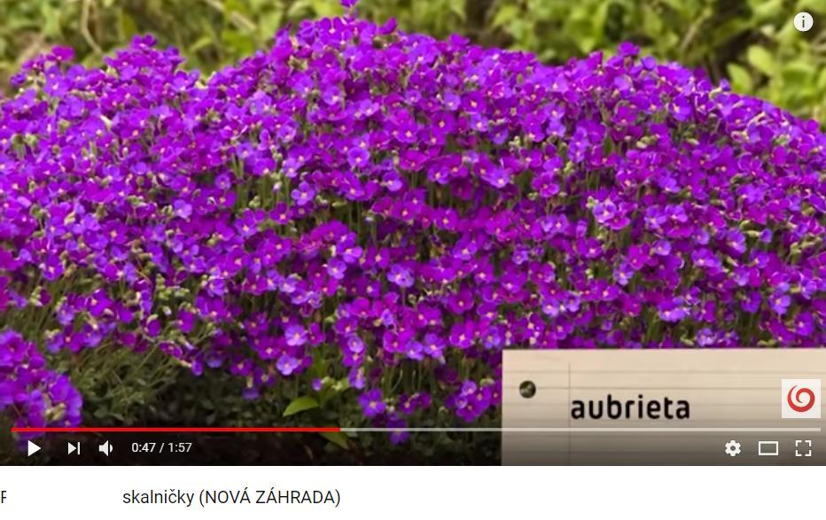 Herbár kvetín, kríkov a stromov - Obrázok č. 141