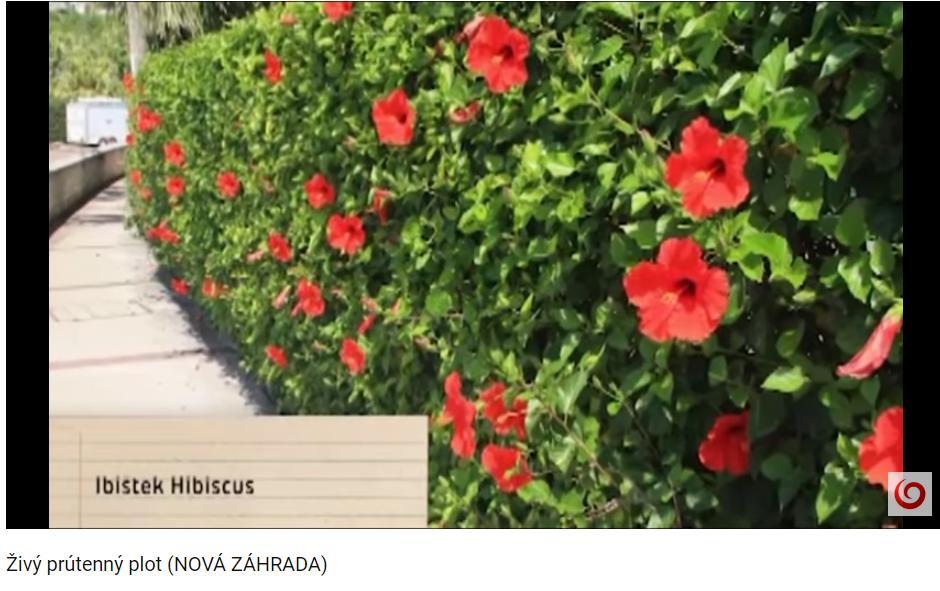 Herbár kvetín, kríkov a stromov - Obrázok č. 145