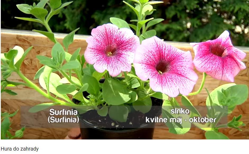 Herbár kvetín, kríkov a stromov - Obrázok č. 160