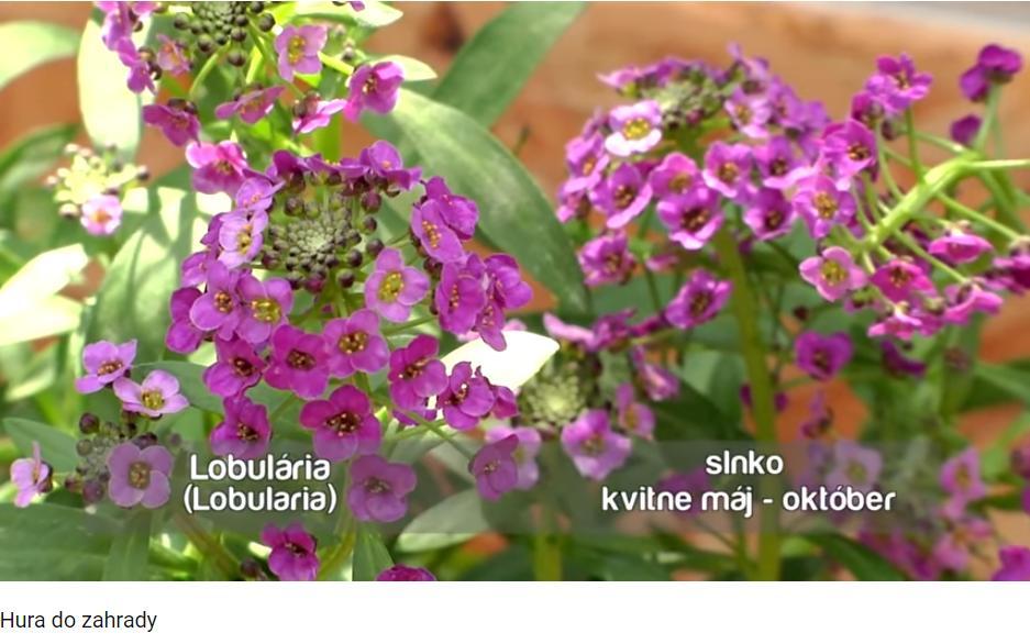 Herbár kvetín, kríkov a stromov - Obrázok č. 164