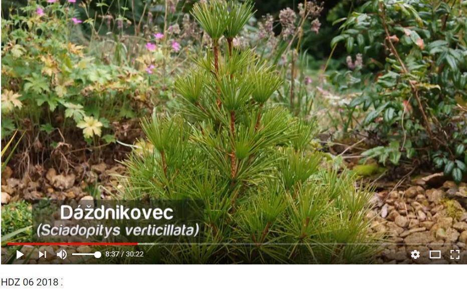 Herbár kvetín, kríkov a stromov - Obrázok č. 170