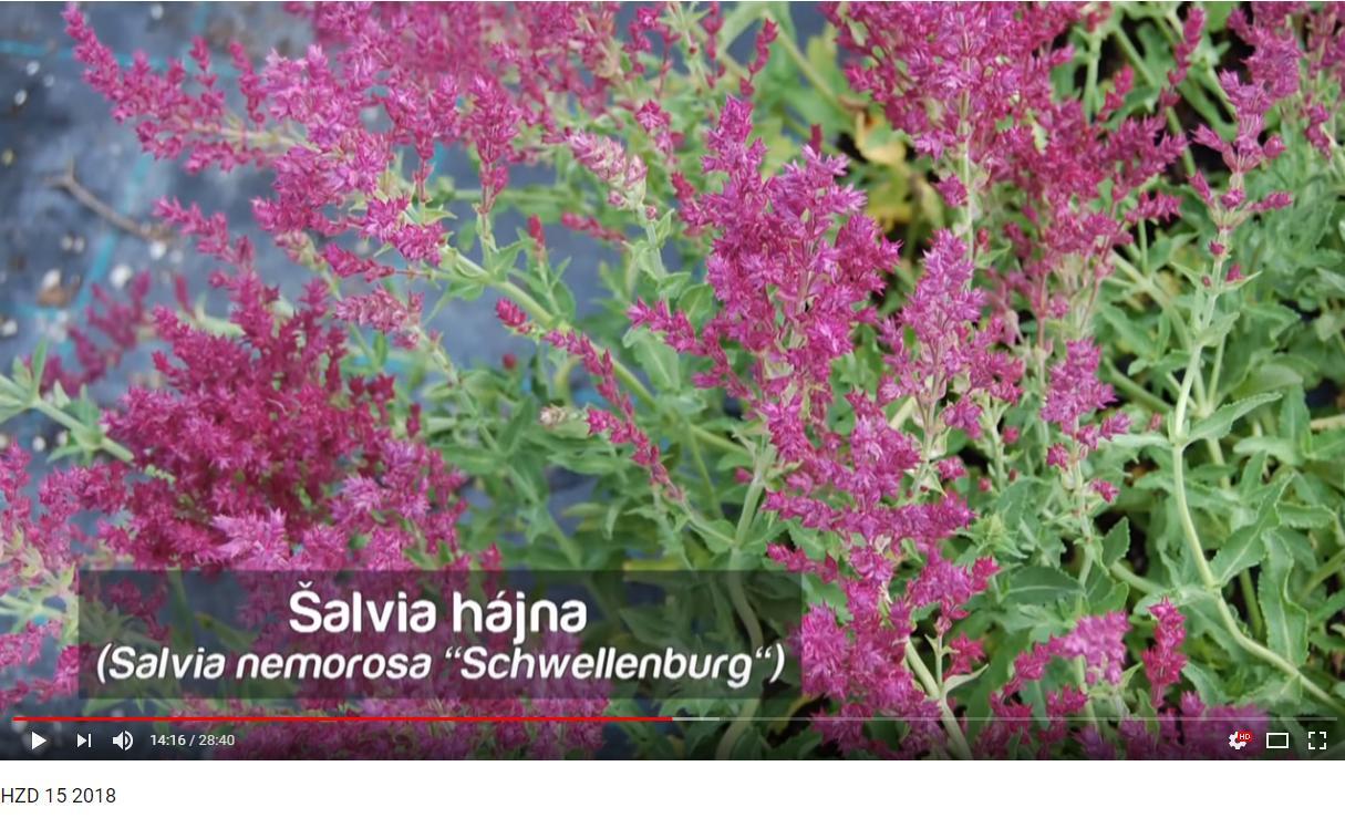 Herbár kvetín, kríkov a stromov - Obrázok č. 186