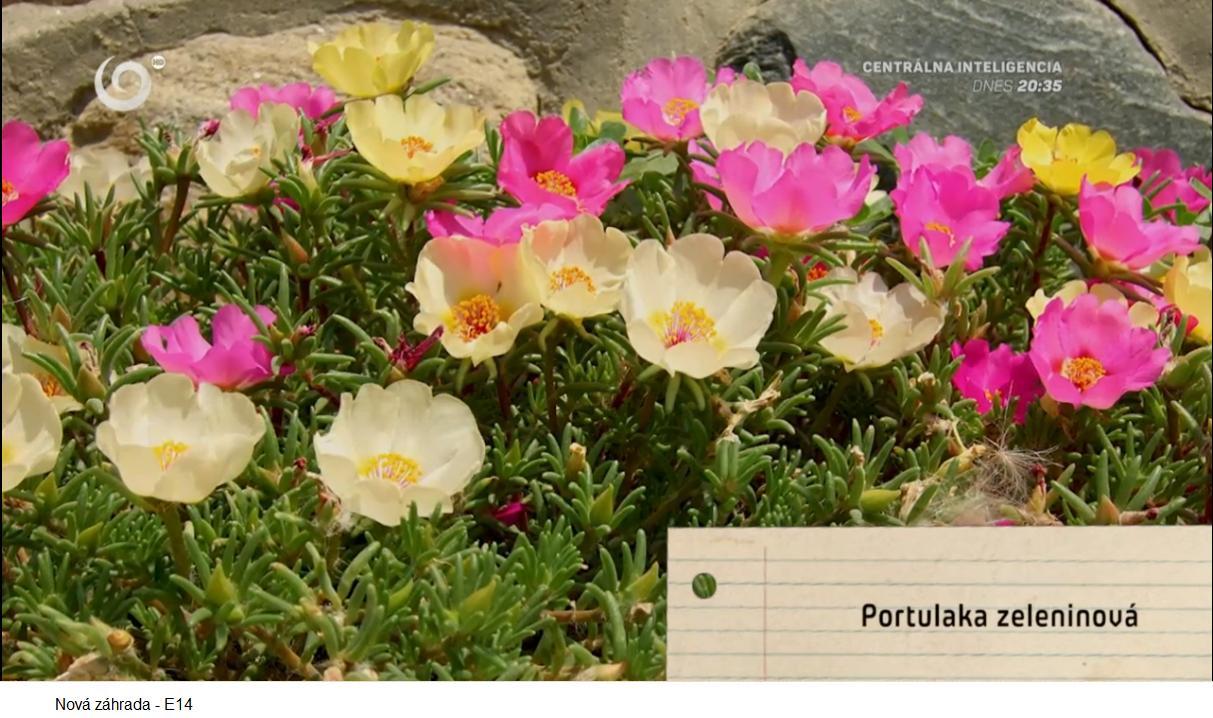 Herbár kvetín, kríkov a stromov - Obrázok č. 188