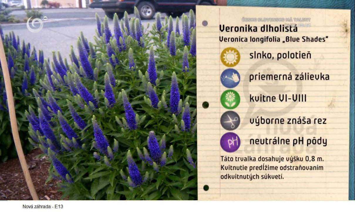 Herbár kvetín, kríkov a stromov - Obrázok č. 190