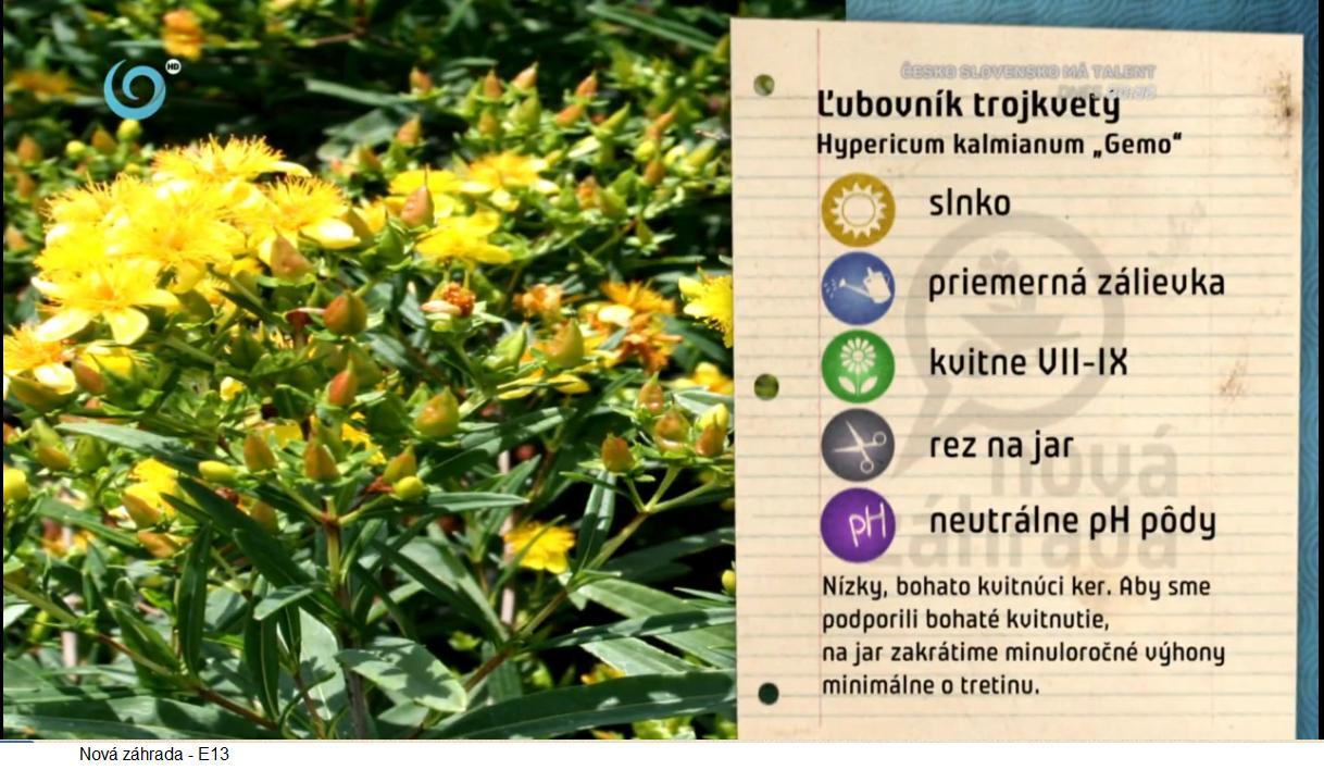 Herbár kvetín, kríkov a stromov - Obrázok č. 192