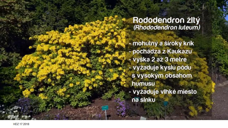 Herbár kvetín, kríkov a stromov - Obrázok č. 210