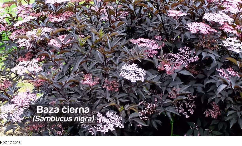 Herbár kvetín, kríkov a stromov - Obrázok č. 216