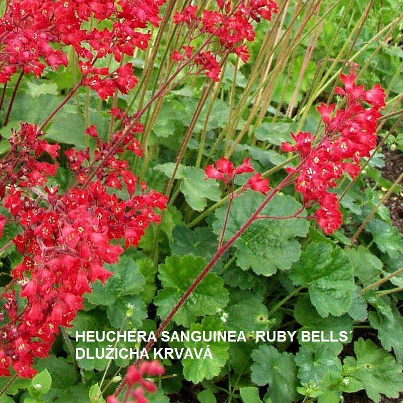 Herbár kvetín, kríkov a stromov - Obrázok č. 221