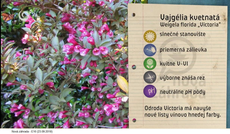 Herbár kvetín, kríkov a stromov - Obrázok č. 224