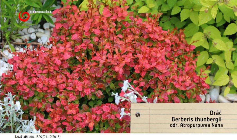 Herbár kvetín, kríkov a stromov - Obrázok č. 245