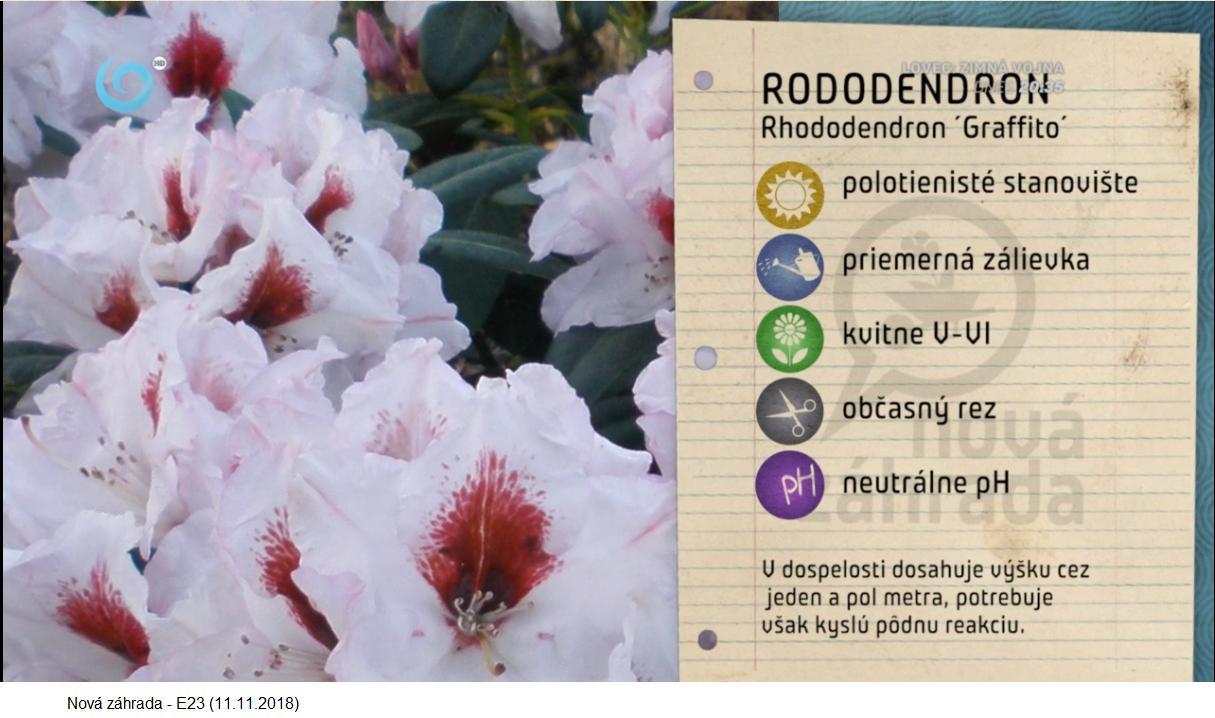 Herbár kvetín, kríkov a stromov - Obrázok č. 271
