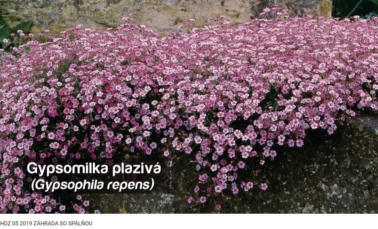 Herbár kvetín, kríkov a stromov - Obrázok č. 273