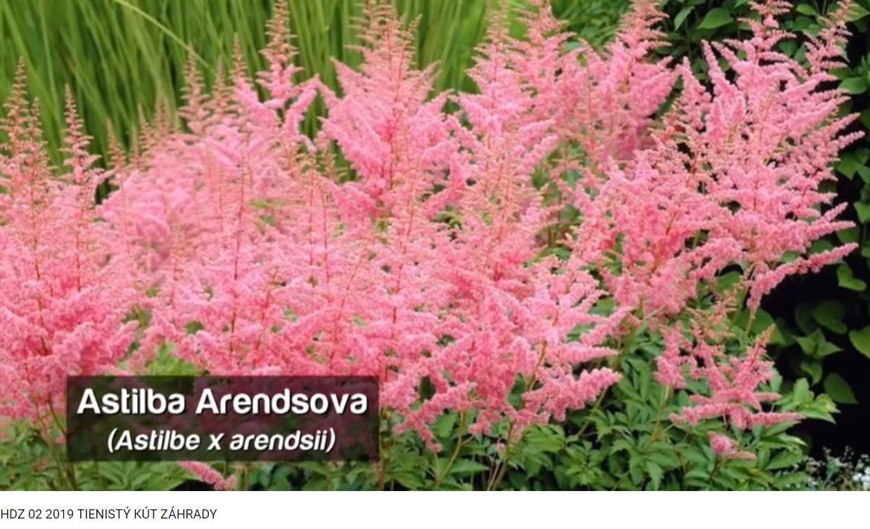 Herbár kvetín, kríkov a stromov - Obrázok č. 274