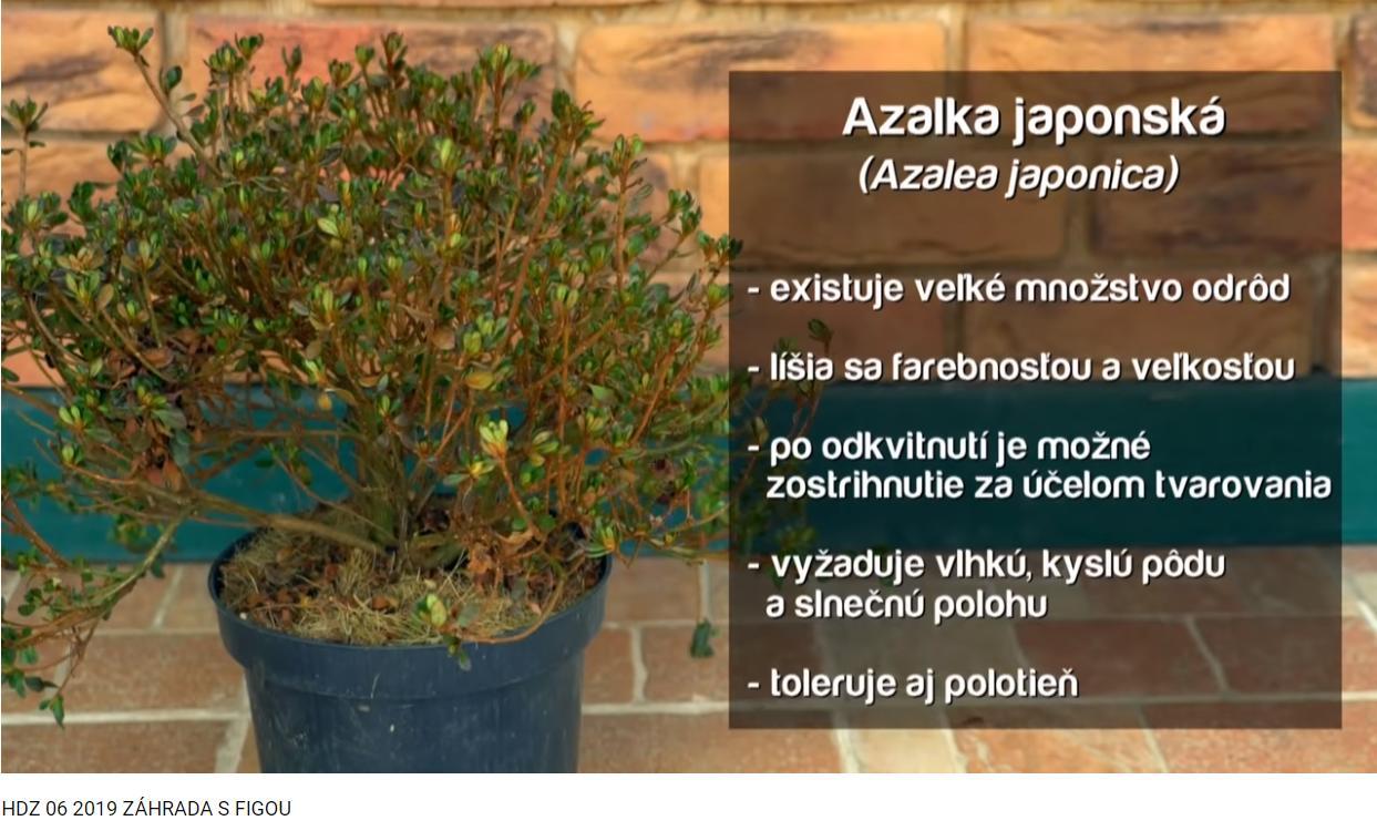Herbár kvetín, kríkov a stromov - Obrázok č. 281