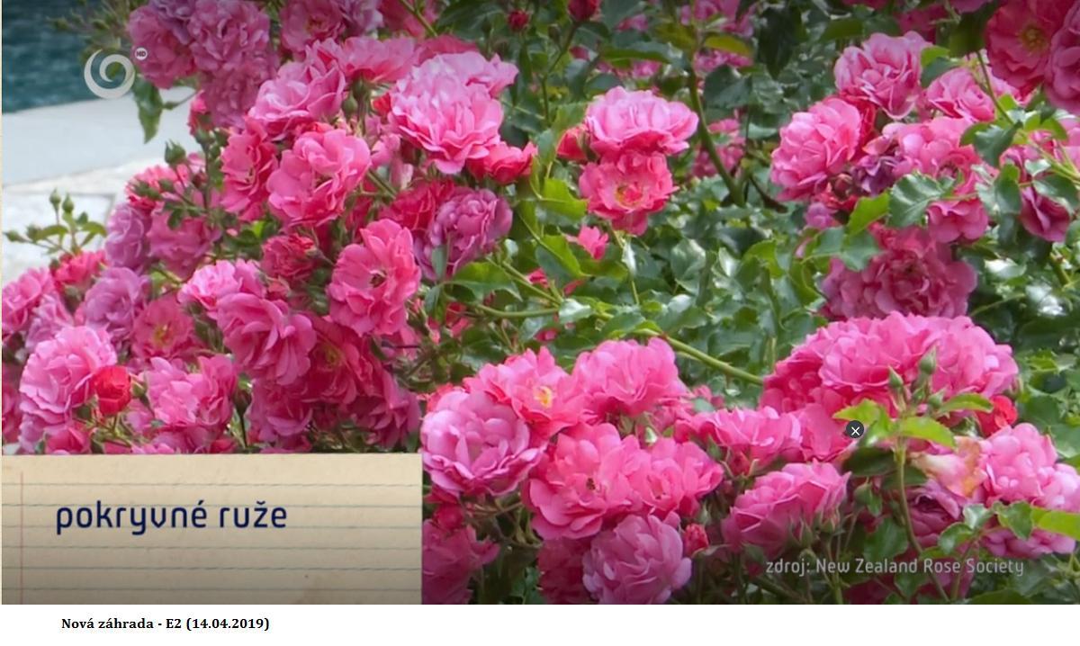 Herbár kvetín, kríkov a stromov - Obrázok č. 288
