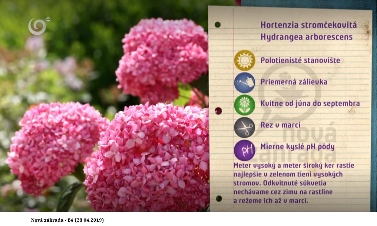 Herbár kvetín, kríkov a stromov - Obrázok č. 298