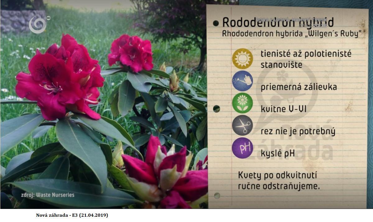 Herbár kvetín, kríkov a stromov - Obrázok č. 300