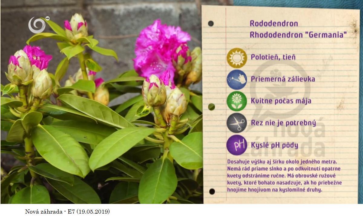 Herbár kvetín, kríkov a stromov - Obrázok č. 311