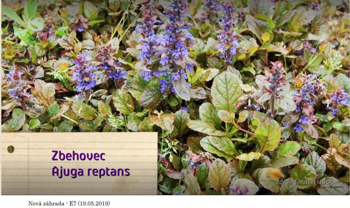 Herbár kvetín, kríkov a stromov - Obrázok č. 315