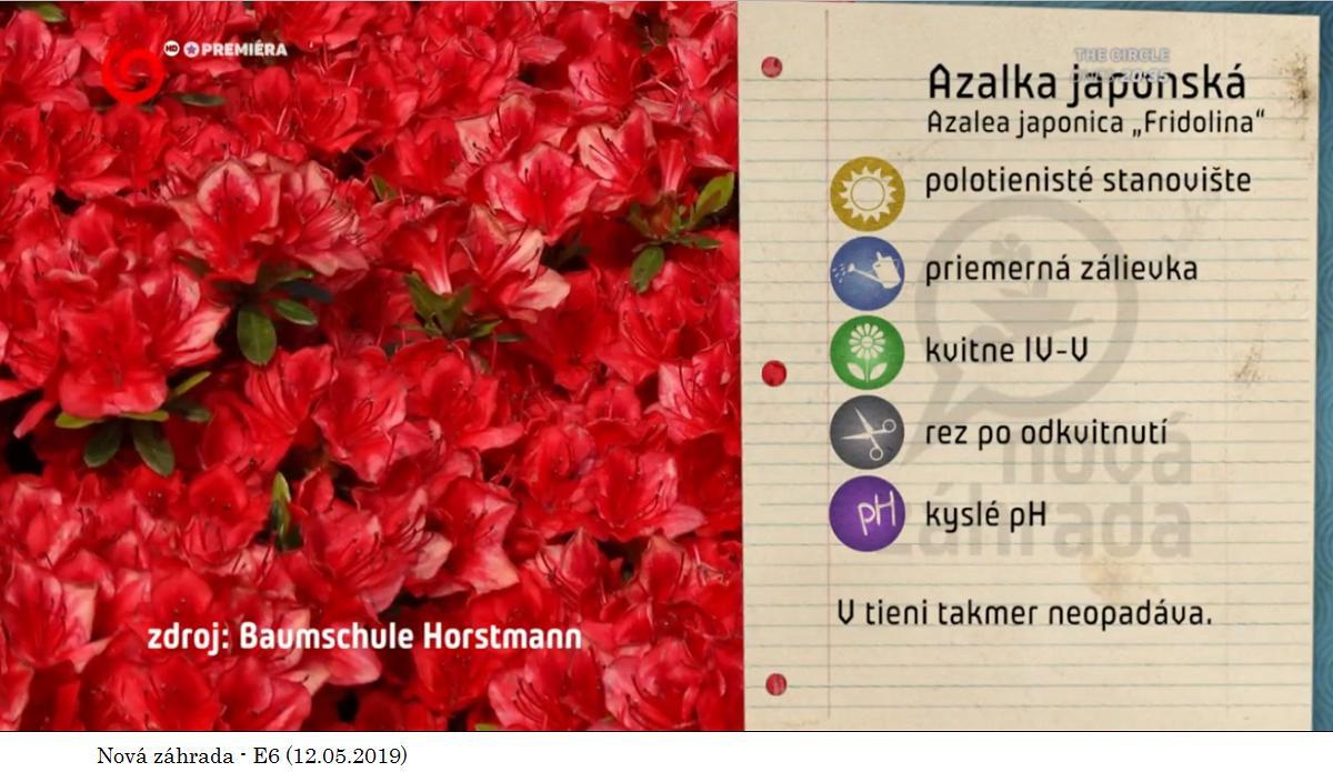 Herbár kvetín, kríkov a stromov - Obrázok č. 318