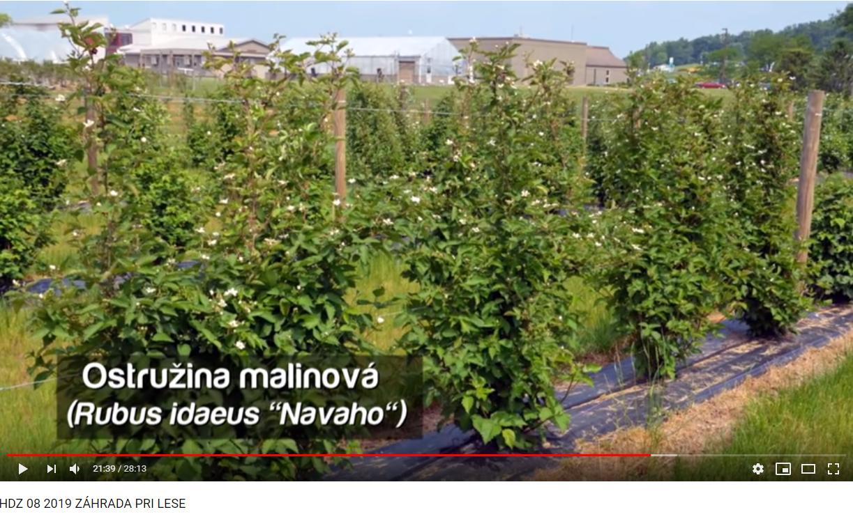 Herbár kvetín, kríkov a stromov - Obrázok č. 327