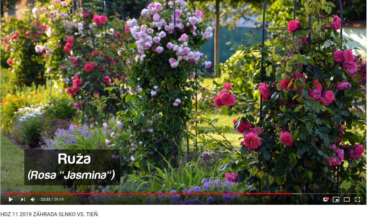 Herbár kvetín, kríkov a stromov - Obrázok č. 330