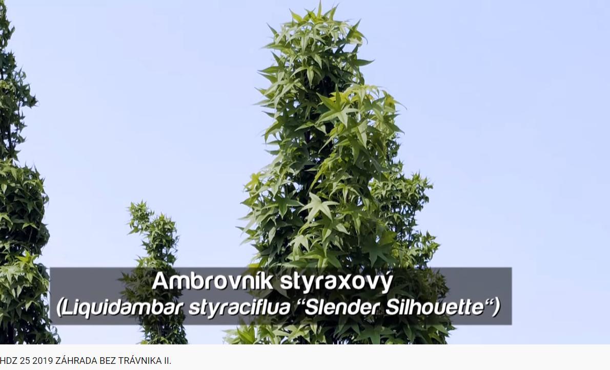 Herbár kvetín, kríkov a stromov - Obrázok č. 341