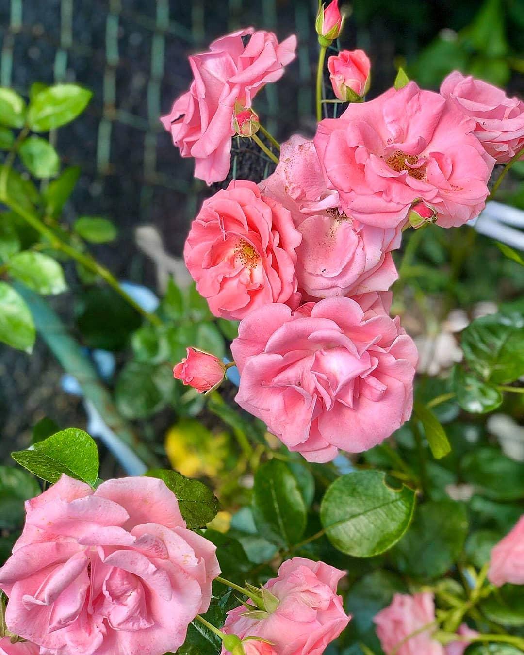 krása kvetu 2020 - Obrázok č. 10