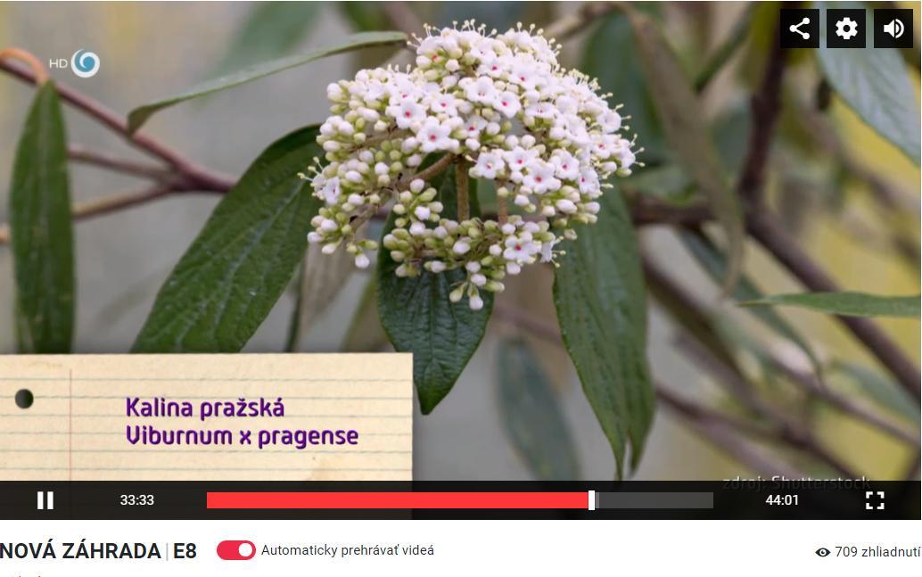 Herbár kvetín, kríkov a stromov - Obrázok č. 480
