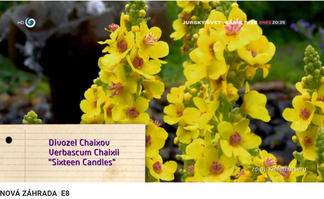 Herbár kvetín, kríkov a stromov - Obrázok č. 469