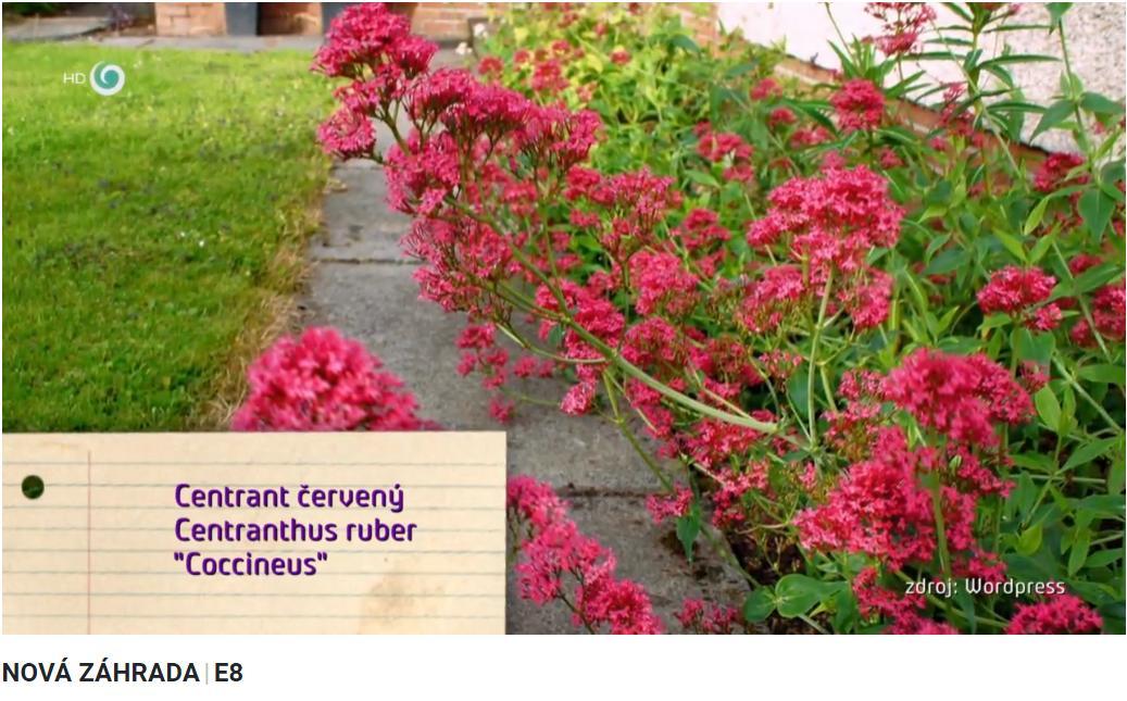 Herbár kvetín, kríkov a stromov - Obrázok č. 479